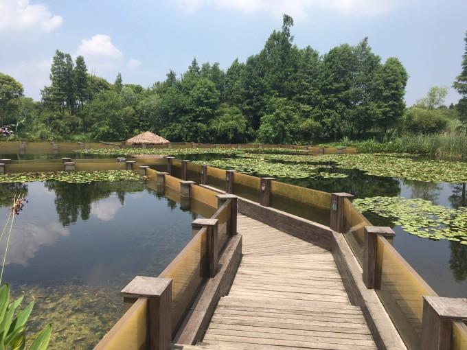 西溪2日游(东区攻略杭州半日游攻略,灵隐寺个人)稻城亚丁v攻略湿地一攻略图片