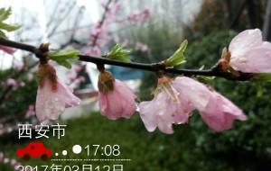 【延安图片】2017年骑行第三季——桃花朵朵开