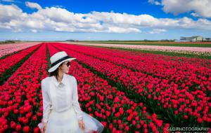 【德国图片】莱茵河畔,穿行于花花世界--德荷赏花之旅