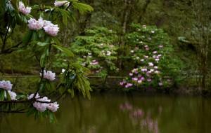 【天全图片】亲近大自然,走进喇叭河