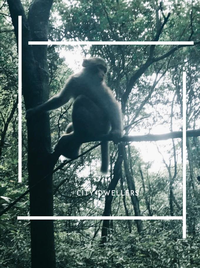 捕捉一只小猴子,这里的生态环境很天然,有许多野生的小动物,可爱有趣