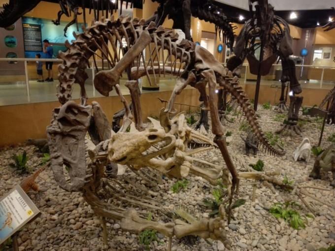 中国古动物馆半日游