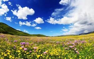 【红原图片】波行天下 之 四川篇 & 草原篇-我的花事