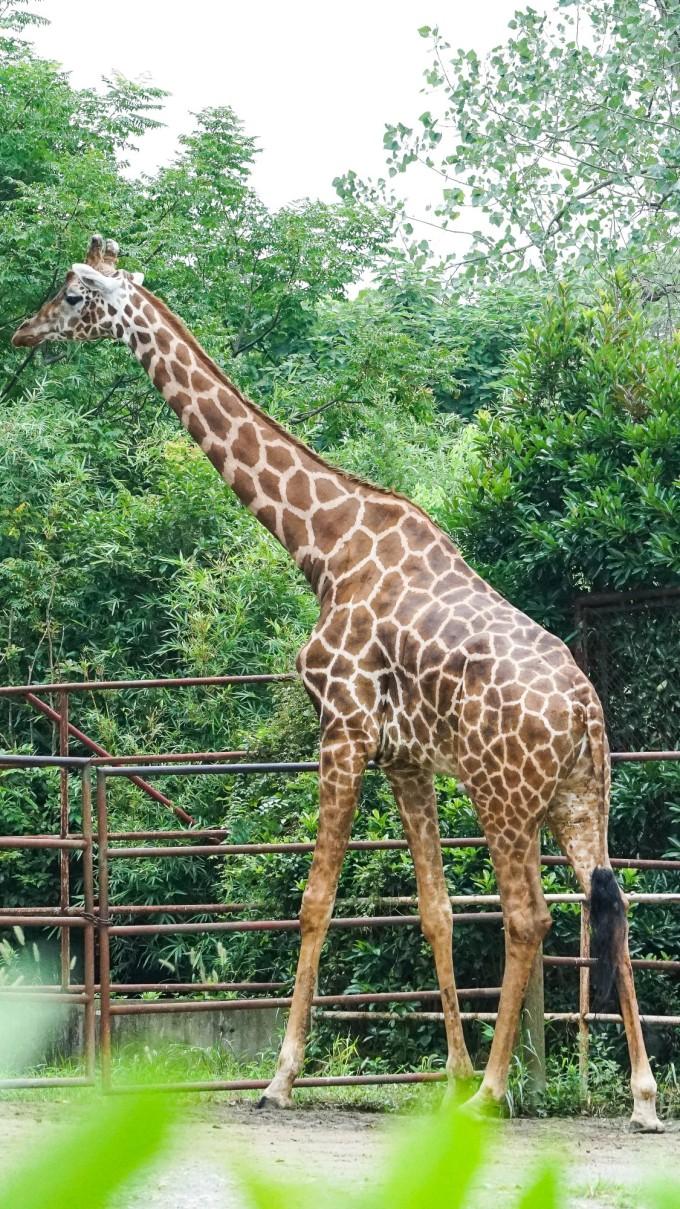 南通出发,目的地上海野生动物园!