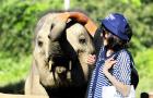清迈美莎大象营美旺大象营公益象营特色一日游亲子游(拥抱象的微笑 无伤骑象喂象 给大象洗澡 可搭配丛林飞跃)