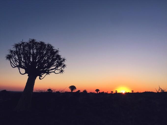 纳米比亚星空下的箭袋树森林(附星空拍摄技巧)