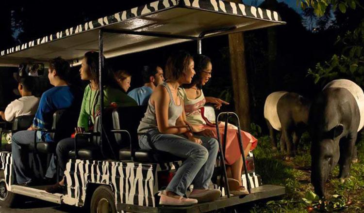 新加坡夜间动物园night safari大门票(极速出票/含小火车/限当日使用