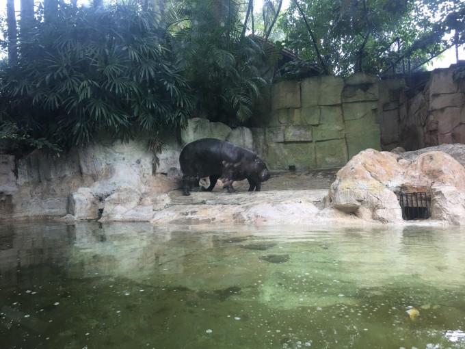 长隆野生动物园的服务真的没得说