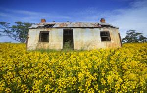 【珀斯图片】【孤芳不自赏】-----爱在西澳,爱在珀斯