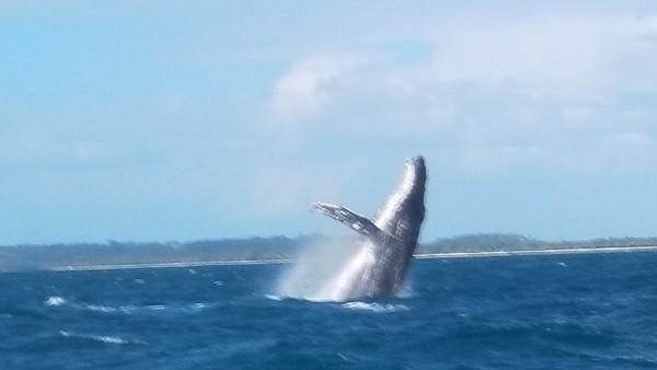 2017年8月圣特玛丽岛观鲸