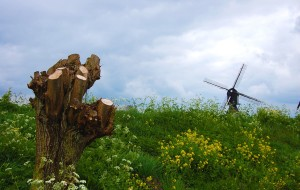【羊角村图片】【皮皮虾的留学生活】何必忧心波折多,荷比归来春无彩——千张照片,多彩荷比,春满7日