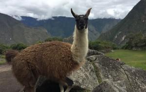 【马丘比丘图片】2017年五月 秘鲁 Cusco+彩虹谷+马丘比丘