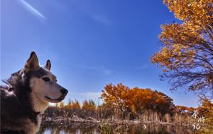 【喀纳斯图片】带狗自驾:一车两人三狗,游走在中国西部的81天【新疆篇】