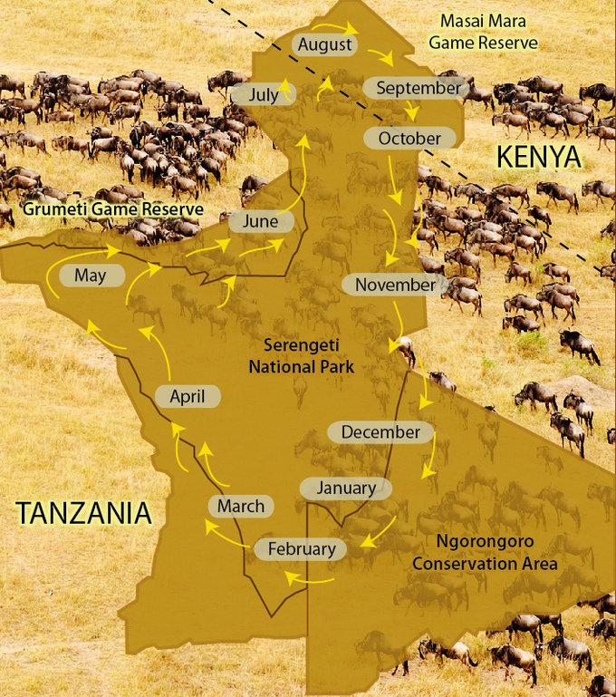 动物大迁徙的主力军主要是三种动物:角马、斑马和瞪羚,它们加一起差不多有200多万只。数量一多,吃饭就成了个问题。不巧的是,它们生活的地方又是热带草原气候,一年只有旱季和雨季。旱季时滴雨不落,草木枯黄;雨季时大雨倾盆,百草丰茂。 所以,每当旱季来临的时候,这帮吃货们就发愁:到哪里才能找到吃的呢?
