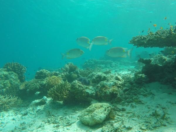 马来西亚 游记   浮潜结束,上船,前往丁巴丁巴岛.