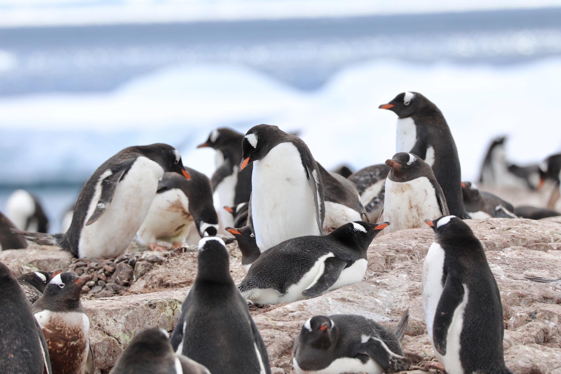 ·驶向世界上最后一块纯净的大陆 南极大陆_游记