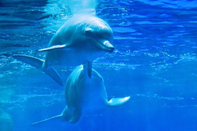壁纸 动物 海底 海底世界 海洋动物 海洋馆 鲸鱼 水族馆 桌面 680_453