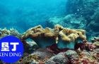 垦丁潜水体验 深潜浮潜 后壁湖水上活动项目专业教练含接送(专业教练无需执照+深潜含垦丁地区免费接送+含保险)