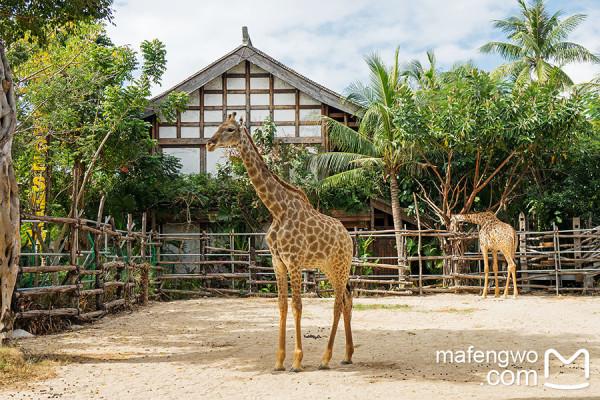 去年北京野生动物园,抢吃喂动物的胡萝卜拦不住呀