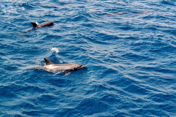 壁纸 动物 海洋动物 桌面 600_400