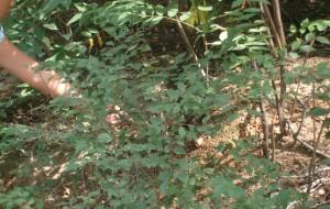 【铁岭图片】龙首山的松鼠们