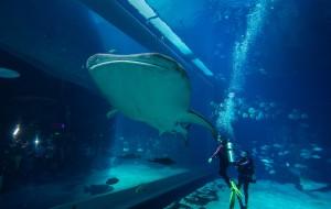 【珠海横琴长隆国际海洋度假区图片】珠海长隆海洋王国~原来不出国也有鲸喜