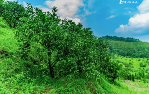 蜈支洲岛美食-绿橙
