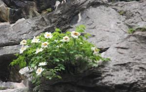 【合肥图片】巢湖最高峰银屏山和千年白牡丹