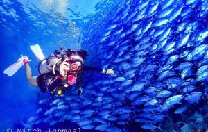 【仙本那图片】朝圣·世界顶级潜点诗巴丹——潜水员心中的麦加圣地
