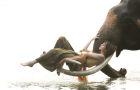 清迈 · 美旺乐象园半日游/与大象亲密接触(黑森林餐厅/ATV越野车/丛林飞跃)