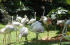 海南海口·热带野生动植物园门票·亲子游出行 (短信取票 提前1小时预定)