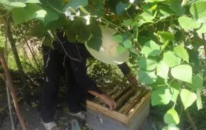 【溆浦图片】蜂蜜  大自然的馈赠