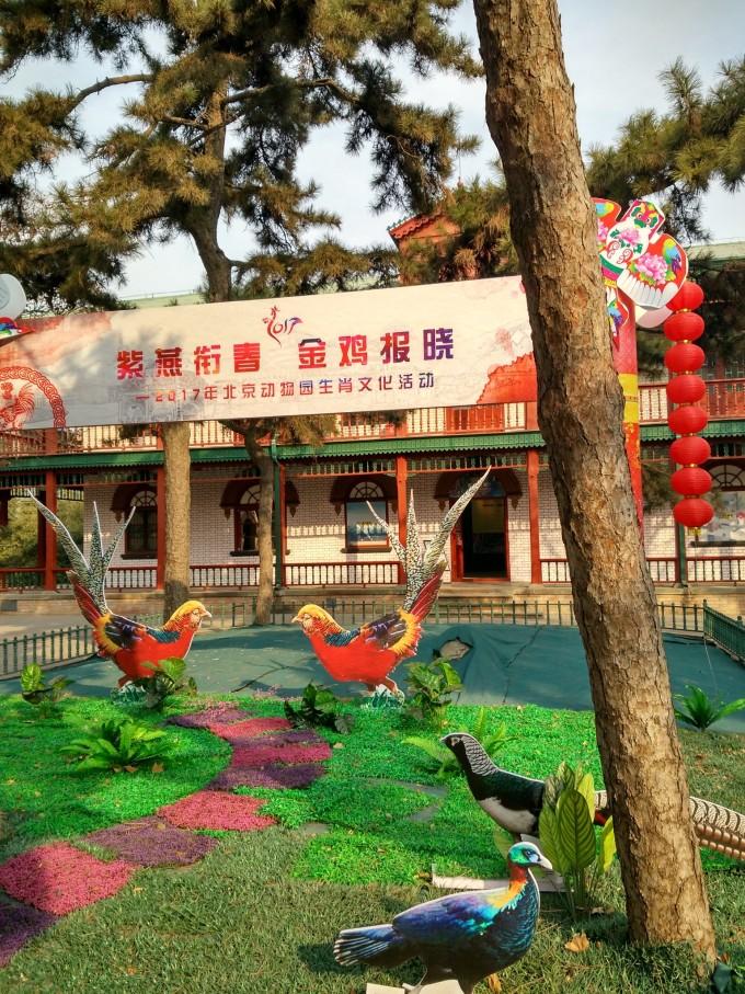 """【北京映像】北京动物园:不仅有""""动物"""",还有""""故事"""""""