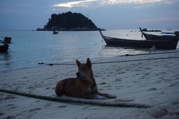 丽贝岛——阳光 碧海 蓝天 还有长尾船和白沙滩