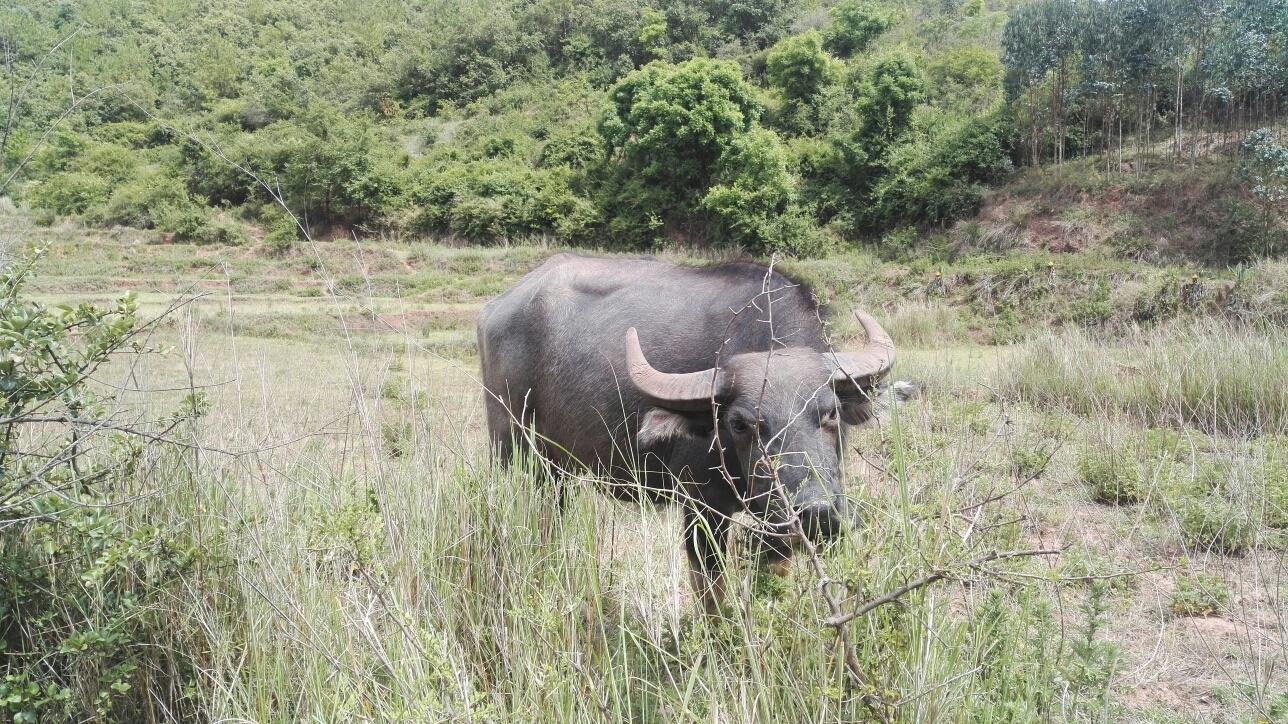 缅甸36字画猜动物南板