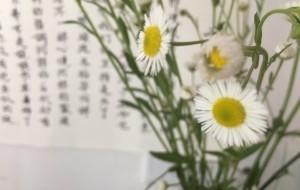 【古蔺图片】野花的狂野