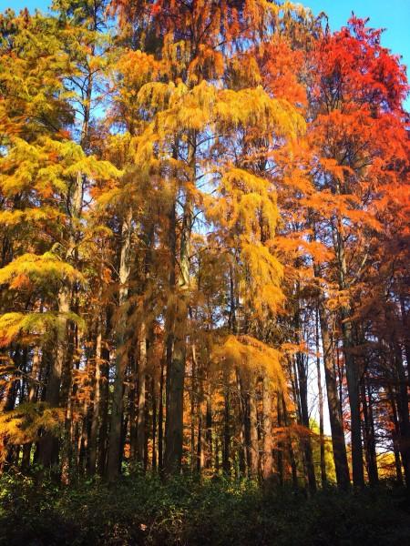 感悟共青森林之美