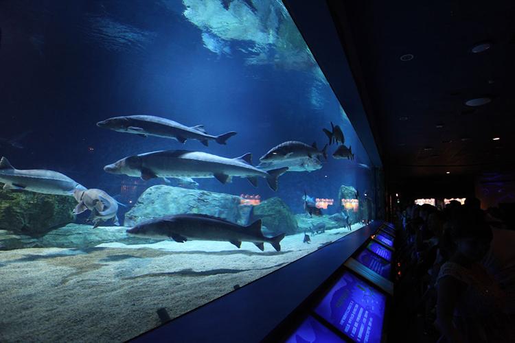 北京太平洋海底世界 北京动物园一日游(亲子游玩 科普