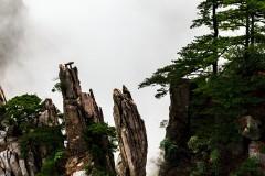 黄山松——坚毅入云木,苍翠有时