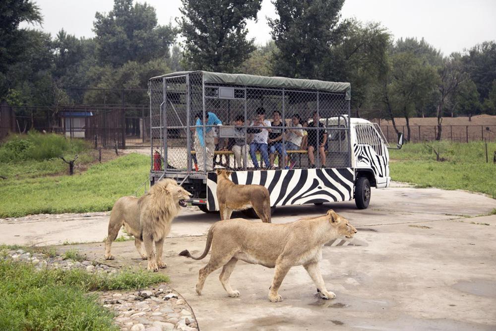 北京野生动物园景区门票 电子票(汇集了世界各地珍稀野生动物200多种)