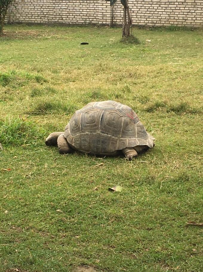 海口天鹅湖野生动物园