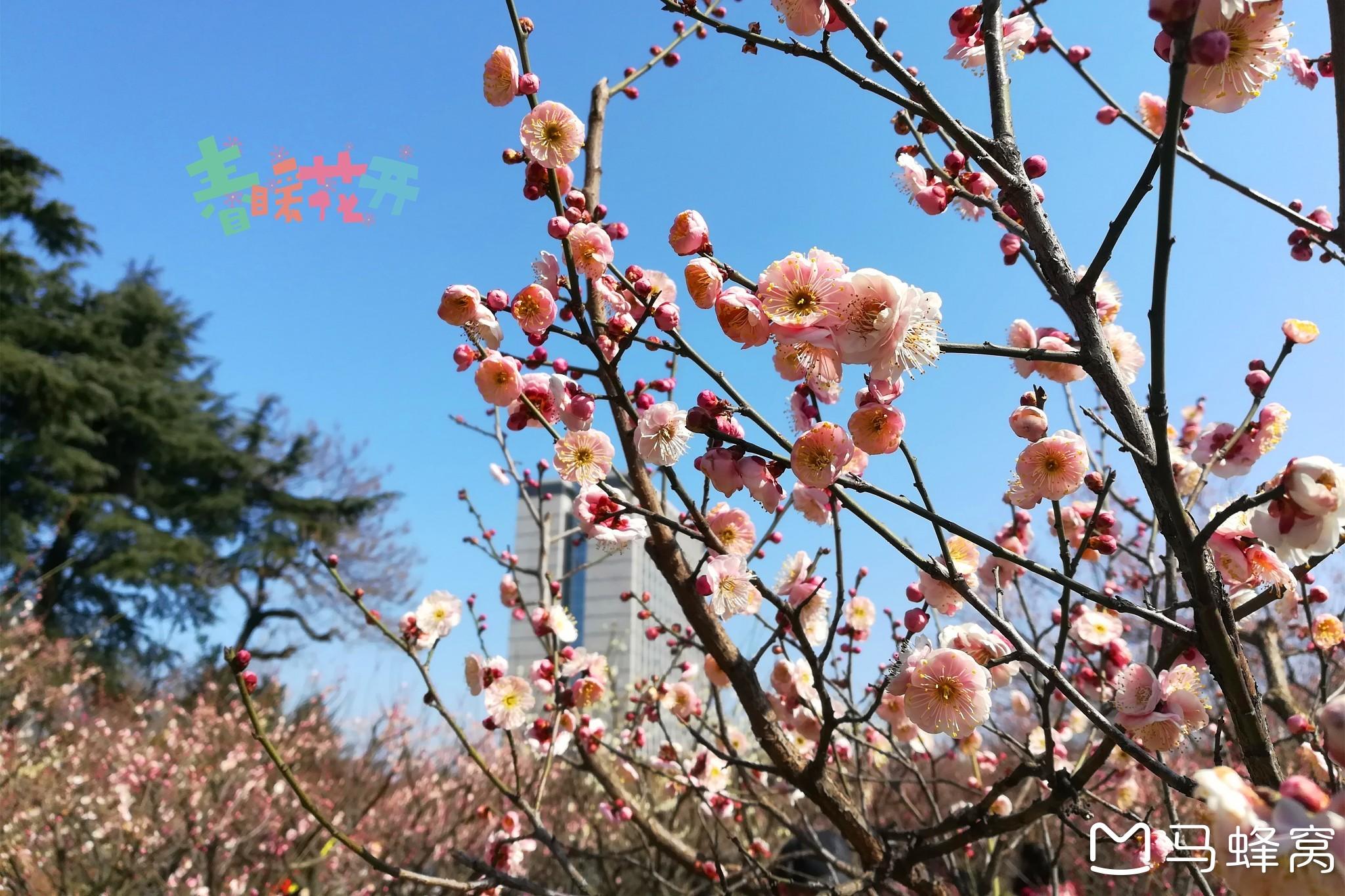 南京哪里赏花好,南京赏花好去处,南京赏花地点有哪些