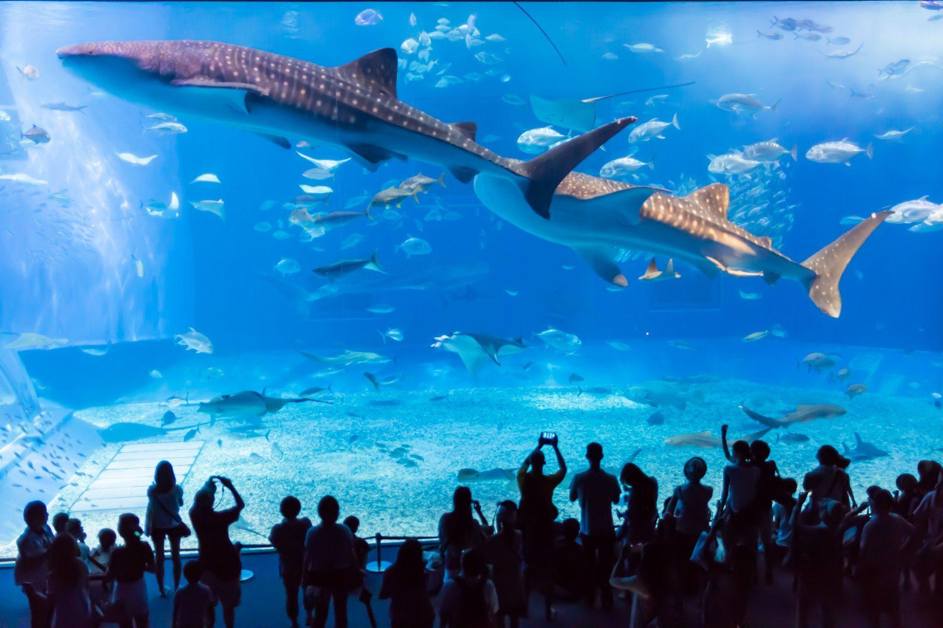 海底神奇的动物