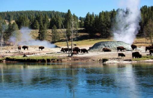 黄石熊世界: 是一座以熊为主题的野生动物园,同时也是黄石野生动物养