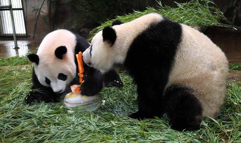 杭州动物园景区门票