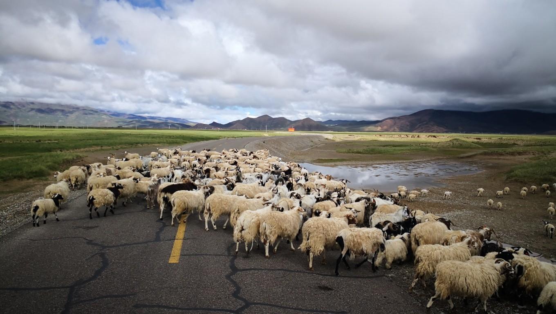 西藏--阿里,與您相伴的時光 60