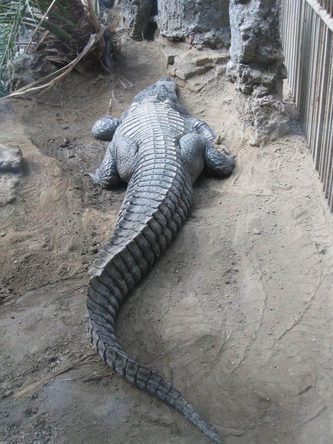 北京动物园,北京旅游攻略 - 马蜂窝