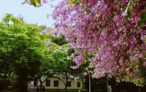 【福州图片】一树繁花入诗词  浸染花香满鼻翼——四月福州城赏花季