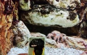 【三重郡图片】日本 三重县 志摩市 志摩水族馆 (绝对不是)海洋公园(1小时游)