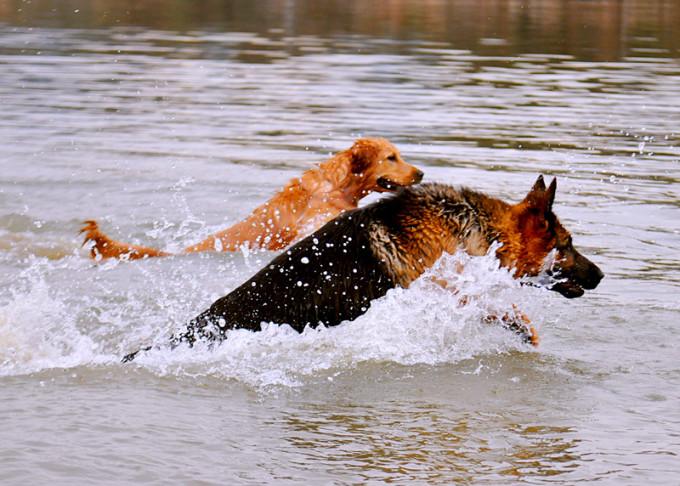 带着狗,找个有山有水的地方,开一家客栈,这只是做梦!带狗旅行游记